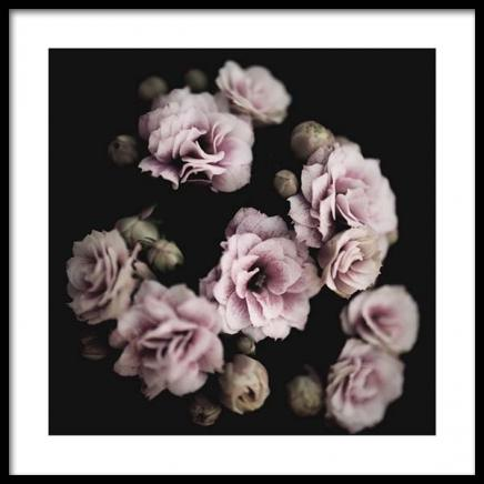 Roses Poster in the group Prints / Sizes / 50x50cm | 20x20 at Desenio AB (2938)