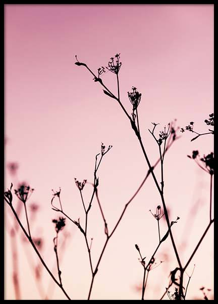 Plants At Pink Sunset Poster in the group Prints / Nature at Desenio AB (2967)