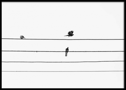 Birds On The Wire Poster in the group Prints / Black & white at Desenio AB (3105)