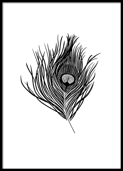 Peacock Feather Poster in the group Prints / Black & white at Desenio AB (3108)