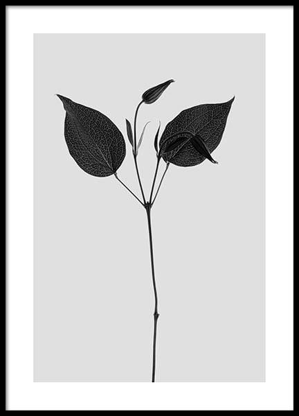 Clematic Plant Grey Poster in the group Prints / Floral at Desenio AB (3112)