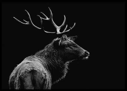 Deer Black Poster in the group Prints / Black & white at Desenio AB (3135)