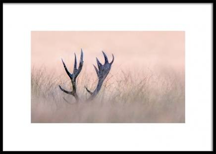 Deer Antlers Poster in the group Prints / Animals at Desenio AB (3137)