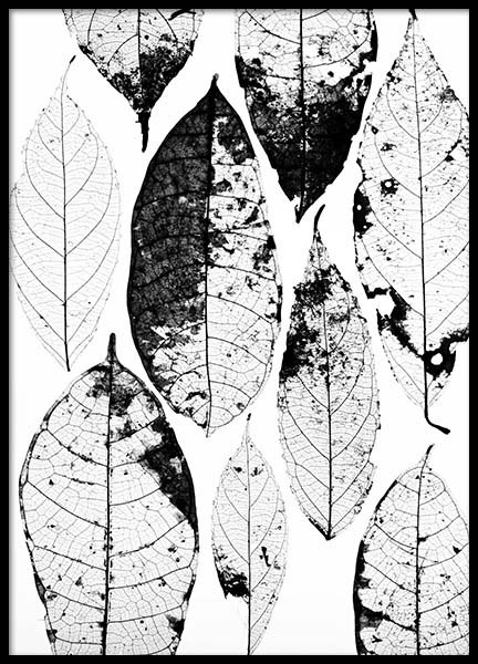 Leaf Skeletons No1 Poster in the group Prints / Floral at Desenio AB (3157)