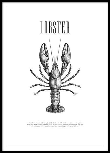 Lobster No2 Poster in the group Prints / Sizes / 50x70cm | 20x28 at Desenio AB (3162)
