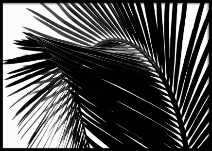 Black Palm Leaf One Poster in the group Prints / Photographs at Desenio AB (3277)