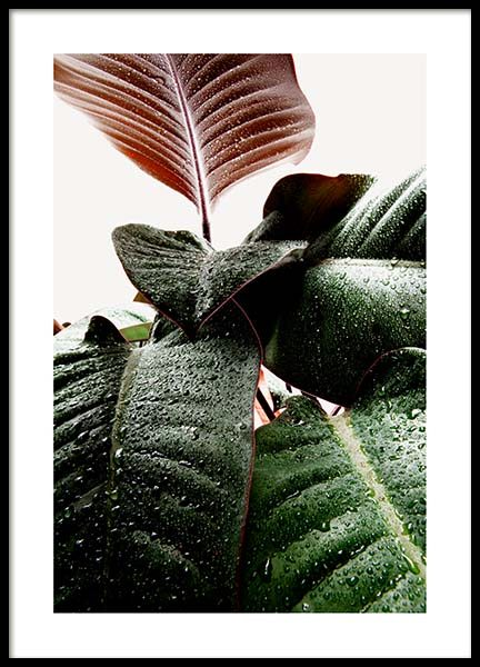 Wet Rubber Leaf One Poster in the group Prints / Floral at Desenio AB (3335)
