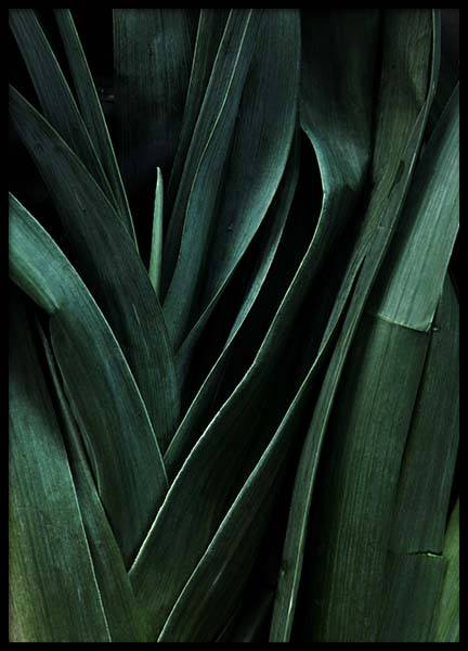 Leek Close Up Poster in the group Prints / Kitchen at Desenio AB (3490)
