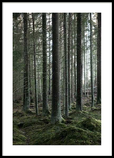 Deep Forest Poster in the group Prints / Photographs at Desenio AB (3499)