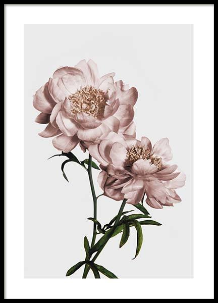 Peony No2 Poster in the group Prints / Floral at Desenio AB (3506)
