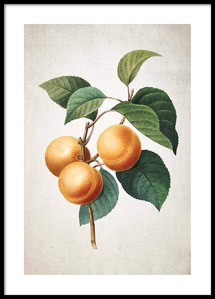Apricot Poster in the group Prints / Kitchen at Desenio AB (3513)
