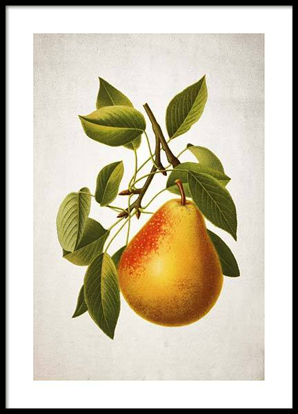 Pear Poster in the group Prints / Kitchen at Desenio AB (3515)