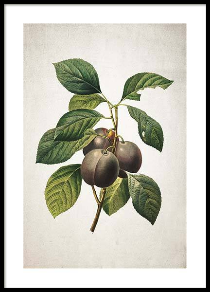 Plum Poster in the group Prints / Kitchen at Desenio AB (3516)