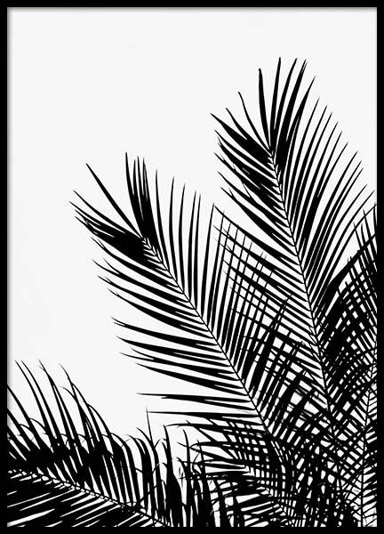 Black Palm Tree One Poster