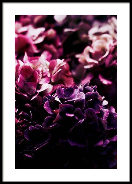 Purple hydrangea Poster in the group Prints / Sizes / 50x70cm | 20x28 at Desenio AB (3533)