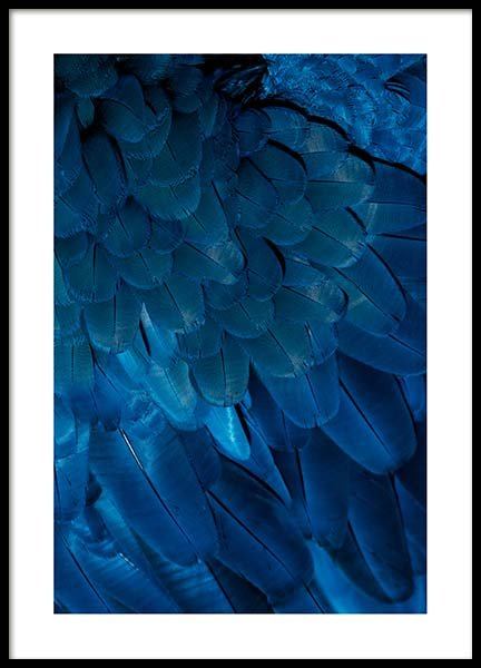 Deep Blue Feathers Poster in the group Prints / Photographs at Desenio AB (3538)