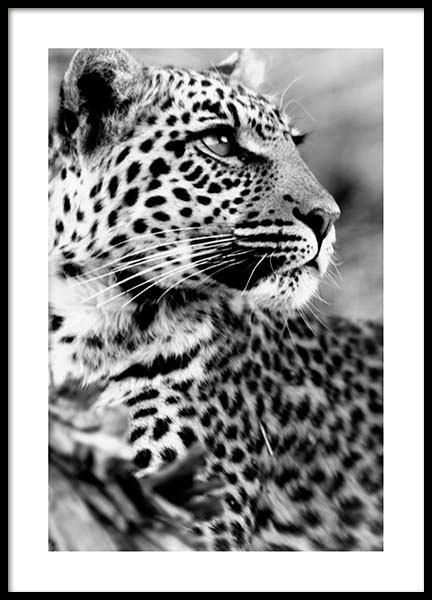 Leopard Poster in the group Prints / Black & white at Desenio AB (3541)
