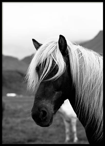 Horse portrait Poster in the group Prints / Sizes / 50x70cm | 20x28 at Desenio AB (3546)