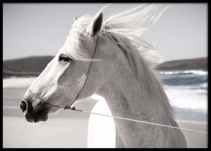 White Horse On Beach Poster in the group Prints / Photographs at Desenio AB (3547)