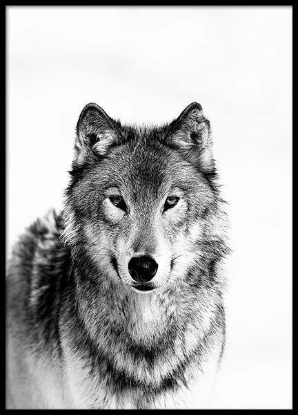 Wolf B&W Poster in the group Prints / Black & white at Desenio AB (3548)