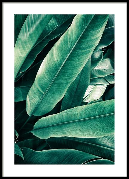 Banana Leaves Close Up Poster in the group Prints / Photographs at Desenio AB (3549)