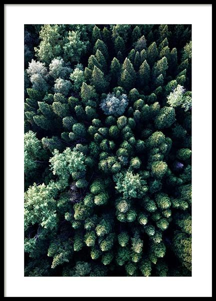 Forest Aerial Poster in the group Prints / Nature prints at Desenio AB (3576)