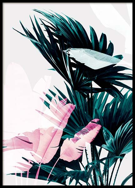 Palm Exposure Poster in the group Prints / Botanical at Desenio AB (3591)