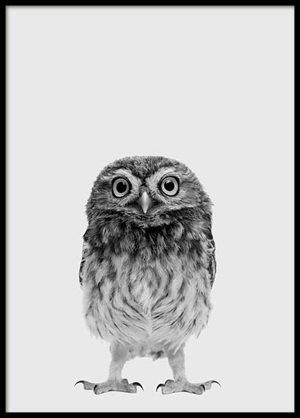 The Little Owl Poster in the group Prints / Kids wall art at Desenio AB (3637)