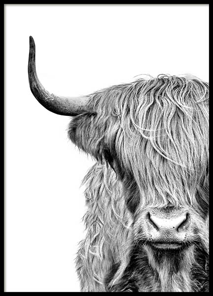 Highland Cow Close Up Poster in the group Prints / Black & white at Desenio AB (3638)