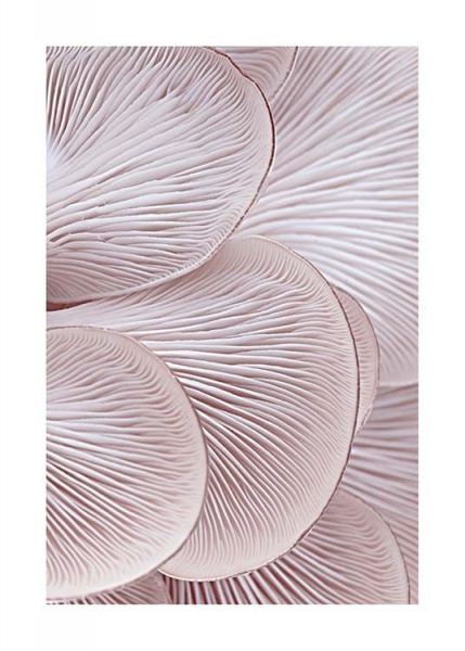 Pink Oyster Pattern One Poster in the group Prints / Photographs at Desenio AB (3652)