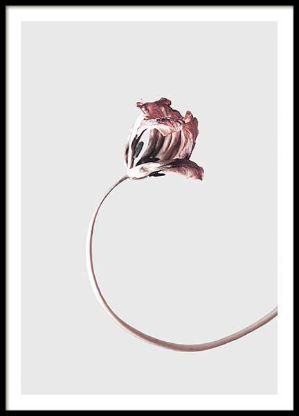 Simple Elegance Poster in the group Prints / Floral at Desenio AB (3656)