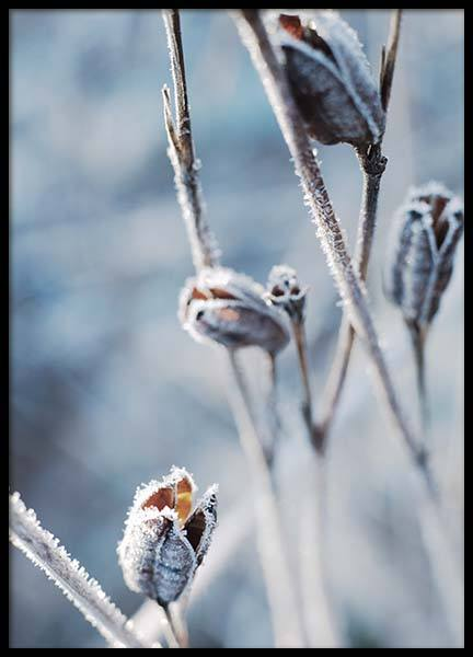 Frosty Beautys No2 Poster in the group Prints / Floral at Desenio AB (3714)