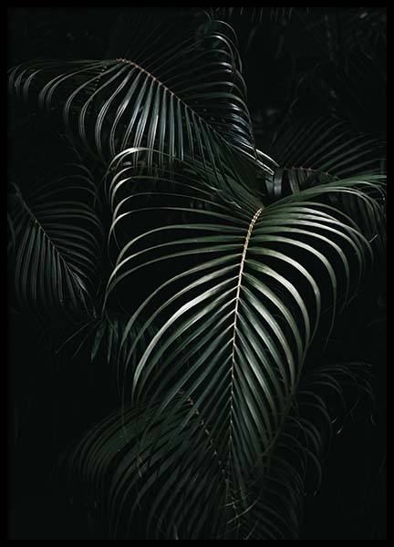 Dark Green Palm Leaves No1 Poster in the group Prints / Photographs at Desenio AB (3772)
