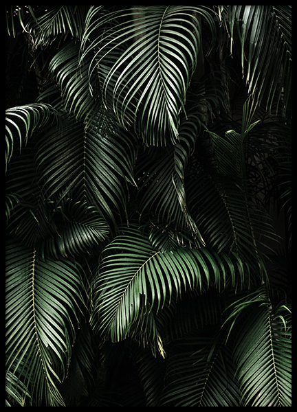 Dark Green Palm Leaves No2 Poster in the group Prints / Floral at Desenio AB (3773)
