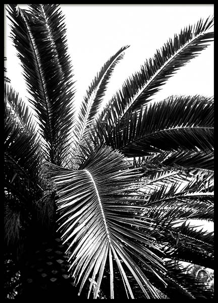 Palm Tree Crown Poster in the group Prints / Black & white at Desenio AB (3774)