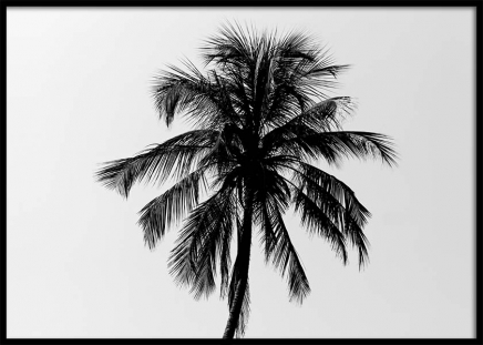 Palm Tree Against Sky Poster in the group Prints / Nature at Desenio AB (3775)
