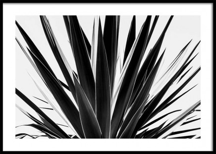 Agave B&W Poster in the group Prints / Sizes / 50x70cm | 20x28 at Desenio AB (3778)
