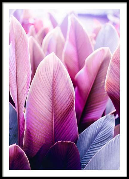 Pink Tropical Leaves Poster in the group Prints / Floral at Desenio AB (3785)