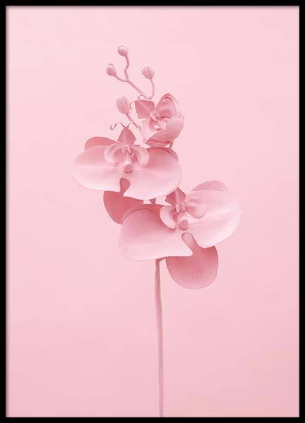 Pink Orchid Poster in the group Prints / Sizes / 50x70cm | 20x28 at Desenio AB (3812)