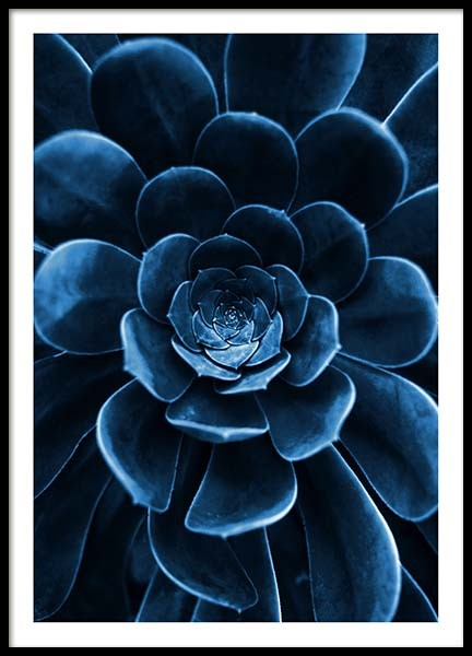 Blue Succulent Poster in the group Prints / Floral at Desenio AB (3826)