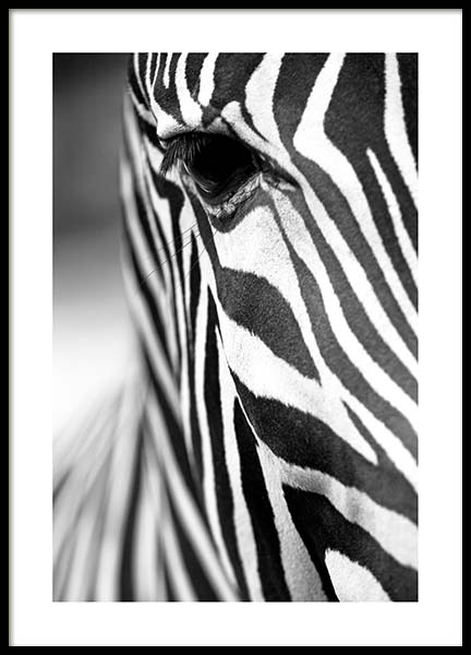 Zebra Close Up Poster in the group Prints / Sizes / 50x70cm | 20x28 at Desenio AB (3855)