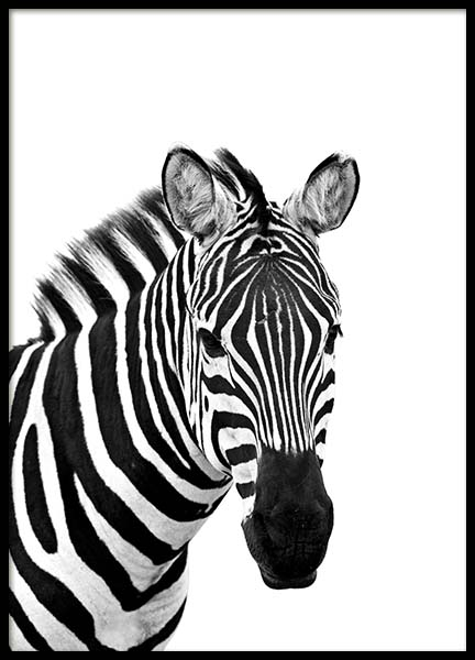 Zebra From Side Poster in the group Prints / Black & white at Desenio AB (3891)