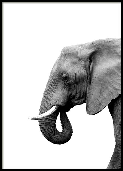 Elephant From Side Poster in the group Prints / Black & white at Desenio AB (3893)