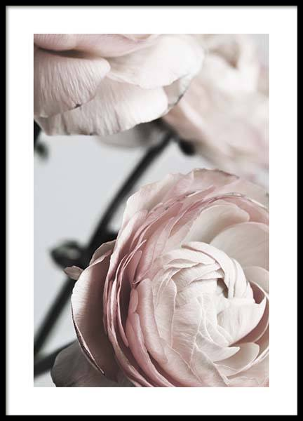 Pink Ranunculus Two Poster in the group Prints / Sizes / 50x70cm | 20x28 at Desenio AB (3924)