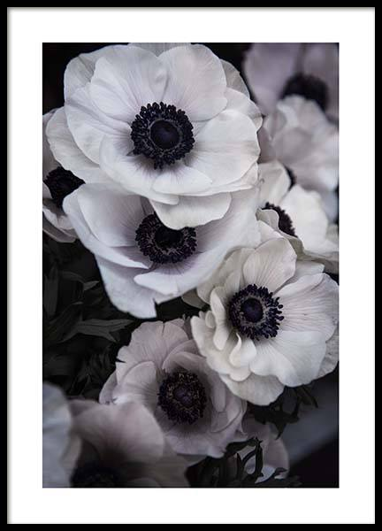 Anemone Flower Two Poster in the group Prints / Photographs at Desenio AB (3928)