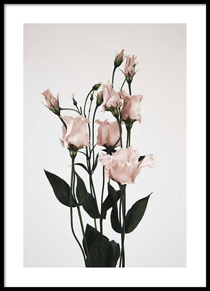 Pink prairie gentian one Poster in the group Prints / Sizes / 50x70cm | 20x28 at Desenio AB (3929)