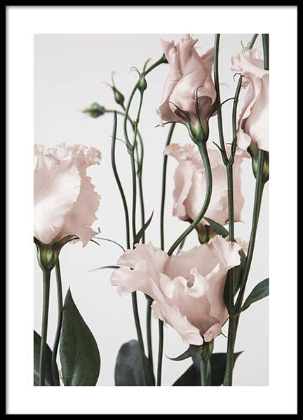 Pink Prairie Gentian Two Poster in the group Prints / Floral at Desenio AB (3930)
