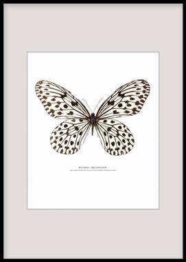 Posters and print with insects and butterflies for a picture wall