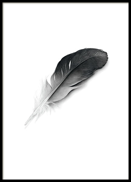 Prints and posters with a black feather, Scandinavian art and posters
