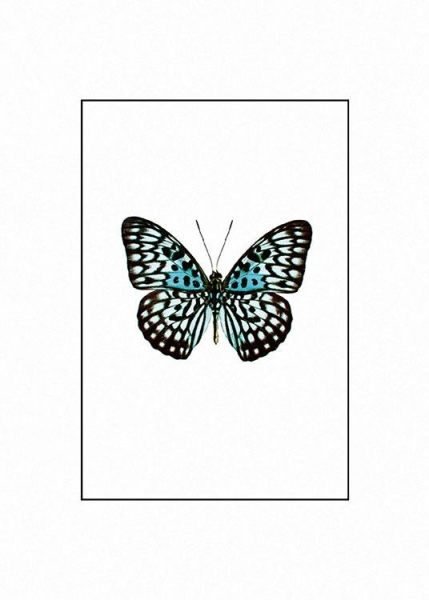 Prints with butterflies and insects online for a clean, modern interior design